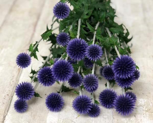 青い花 エキノプス