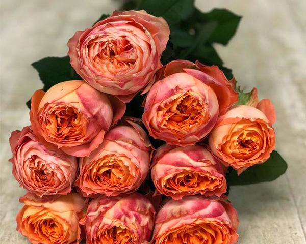 バラ オレンジロマンティカ